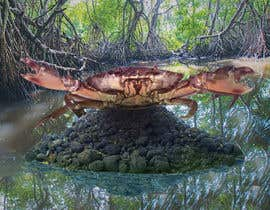 #53 for Australian Mud Crab by octopupus