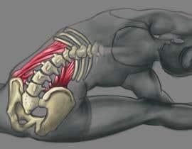 #36 for anatomy art by thunderbirdart