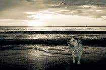 Graphic Design Konkurrenceindlæg #32 for Enhance Dog Photos; Beautifully, Creatively!