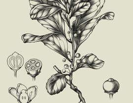 #20 for Line art illustrations for MUY MATE, website and print project af NataliaMeizer