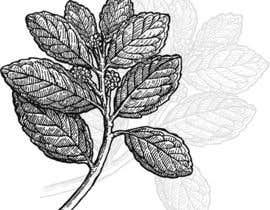 #14 for Line art illustrations for MUY MATE, website and print project af reddmac