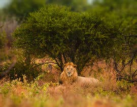#60 for Lion contest (1) af gianfmartin