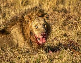 #46 cho Lion contest (5) bởi ihasankazi