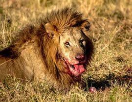 #48 cho Lion contest (5) bởi wanilala