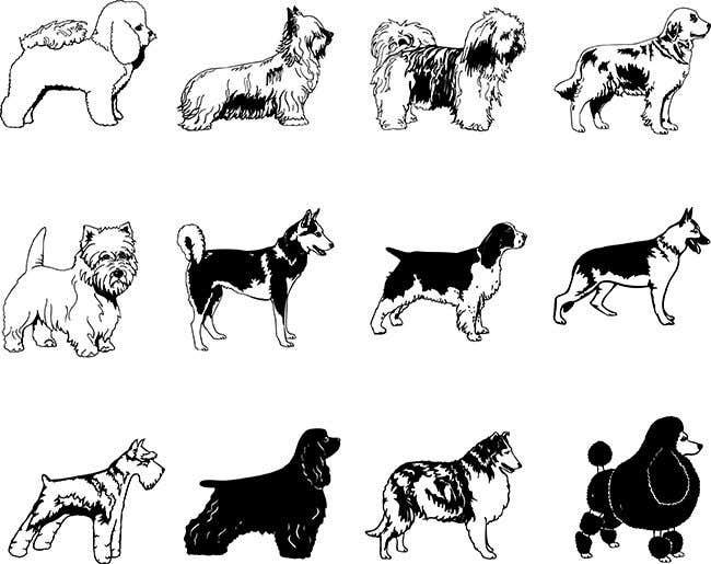 Penyertaan Peraduan #9 untuk Create 11 simple b&w illustrations of dogs and mice for a book