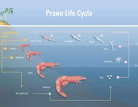 #29 para Illustrate - Prawn Life Cycle por Angelilu