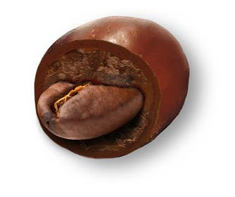 Graphic Design Contest Entry #12 for HD Image of coffee bean coated in chocolate