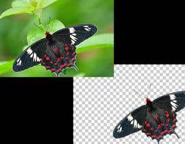 Nro 50 kilpailuun Crop & Resize 100 Photos käyttäjältä MUFASSIRUL