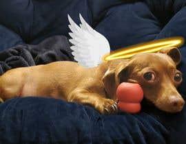 Gemyy tarafından Add effects to a photo of my dog Buddy için no 151