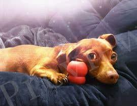 walidbouze tarafından Add effects to a photo of my dog Buddy için no 161