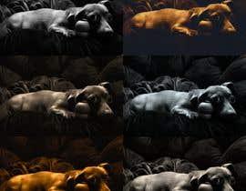 djouherabdou tarafından Add effects to a photo of my dog Buddy için no 157