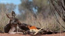 Photoshop Entri Peraduan #48 for Create animated Australian animal characters