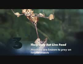 #6 for Create a youtube VIDEO  --------  100 Praying MANTIS attacks in 2 minutes by IftekharSadat