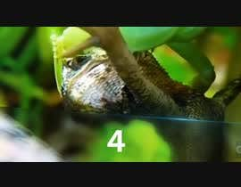 #7 for Create a youtube VIDEO  --------  100 Praying MANTIS attacks in 2 minutes by IftekharSadat