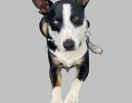 Nro 158 kilpailuun make my dog image background transparent so I can print them on t-shirts, socks, shorts, etc. käyttäjältä designersuchona