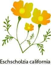 Contest Entry #                                        15                                      for                                         Vector Flower Icons