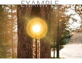 #80 for Advanced PhotoShop editing for an outdoor image with sun flare. by nazeemsylhet