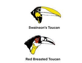 #22 untuk Sketches of Toucans oleh ARIQ1