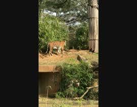Nro 7 kilpailuun Tiger compositing into jungle käyttäjältä hossainmdsahadat