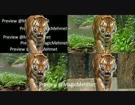 Nro 2 kilpailuun Tiger compositing into jungle käyttäjältä MagicMehmet