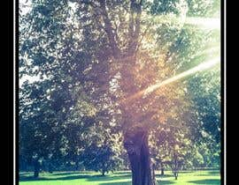 kennsosa tarafından Big Tree Poster için no 13