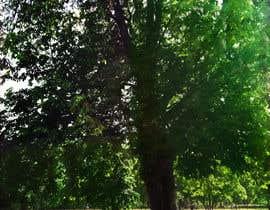 #67 untuk Big Tree Photo edit oleh lippipress