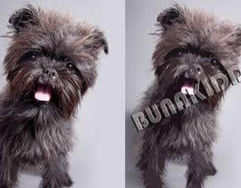 #8 cho Affenpinscher dog converted to Pop Art bởi bunakiddz