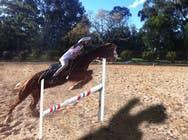 Bài tham dự #25 về Photoshop cho cuộc thi Horse jump photoshop