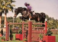 Bài tham dự #45 về Photoshop cho cuộc thi Horse jump photoshop