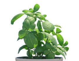 shinodem123 tarafından 3d model of herbs leaves için no 2