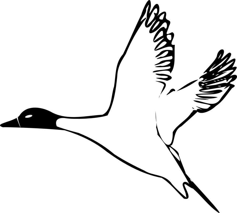Penyertaan Peraduan #                                        7                                      untuk                                         Pintail Duck