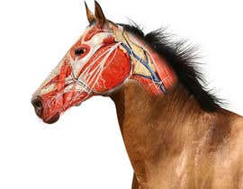#5 for Equine Drawing Nerves and Head of the Horse by samuelexompero