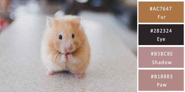 light color combination - hamster