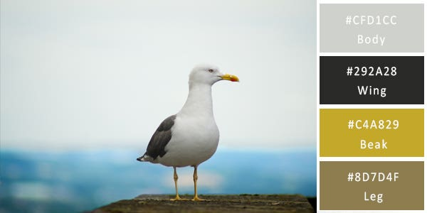 warm and cool color combination - seagull