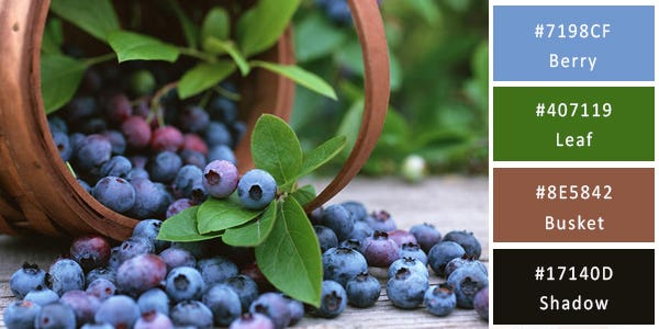 balanced color combination - blueberries