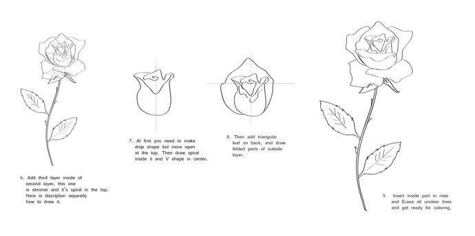 How To Draw A Rose In 7 Steps  - Image 2