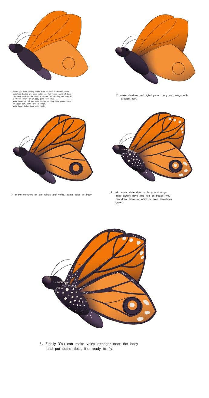 How To Draw A: Butterfly Drawing - Image 4